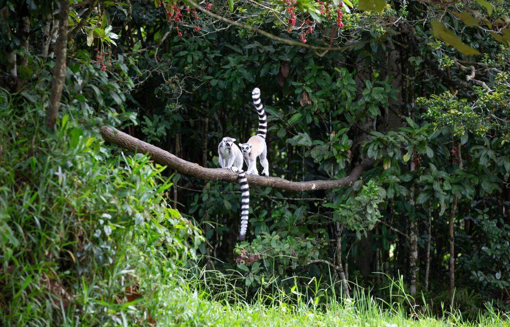 Les animaux fascinants endémiques à Madagascar